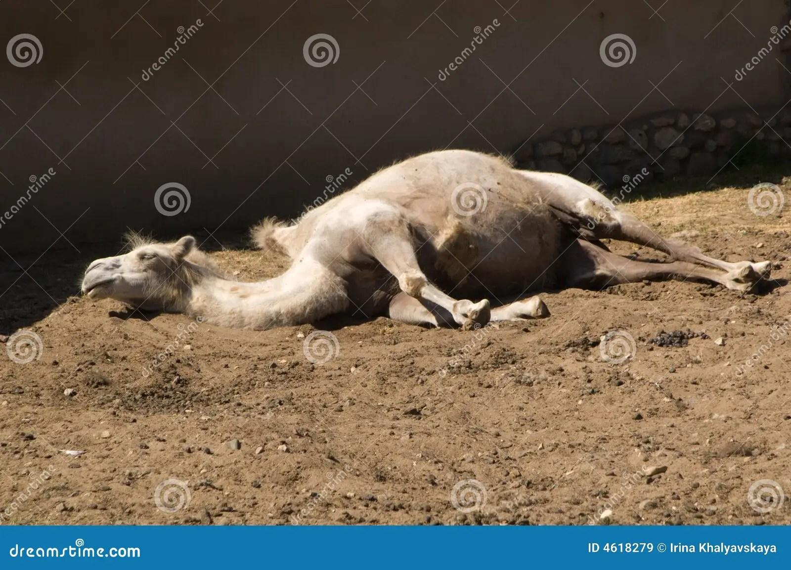 Clip Camel Art Sleeping