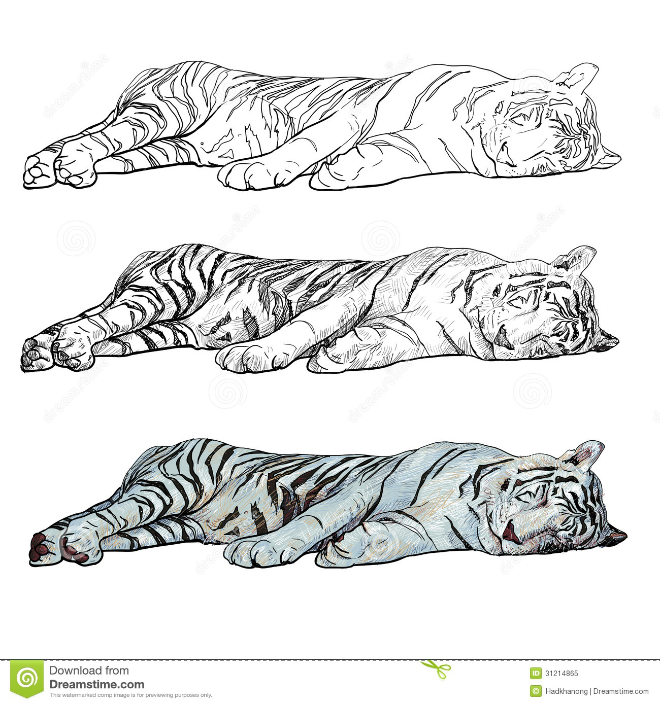 Sleeping Tiger Stock Vector Illustration Of Illustration