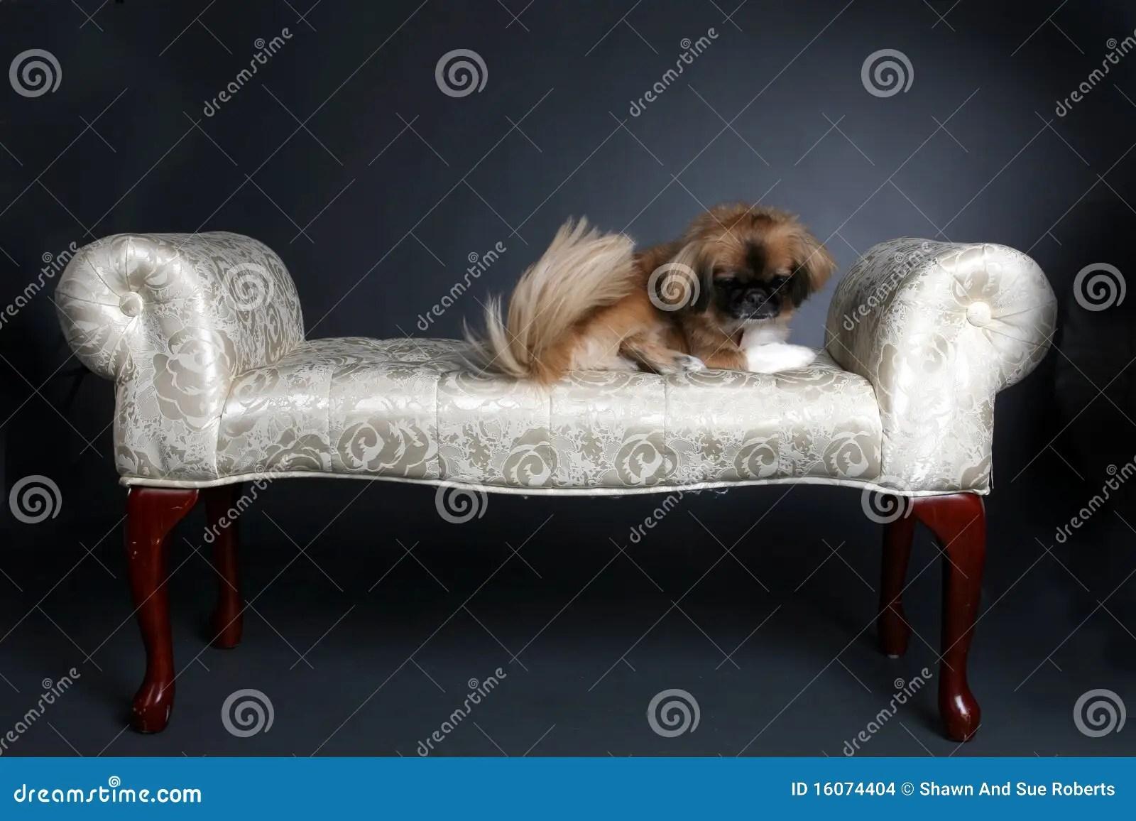Small Lap Dog Sitting On Bench Stock Images Image 16074404