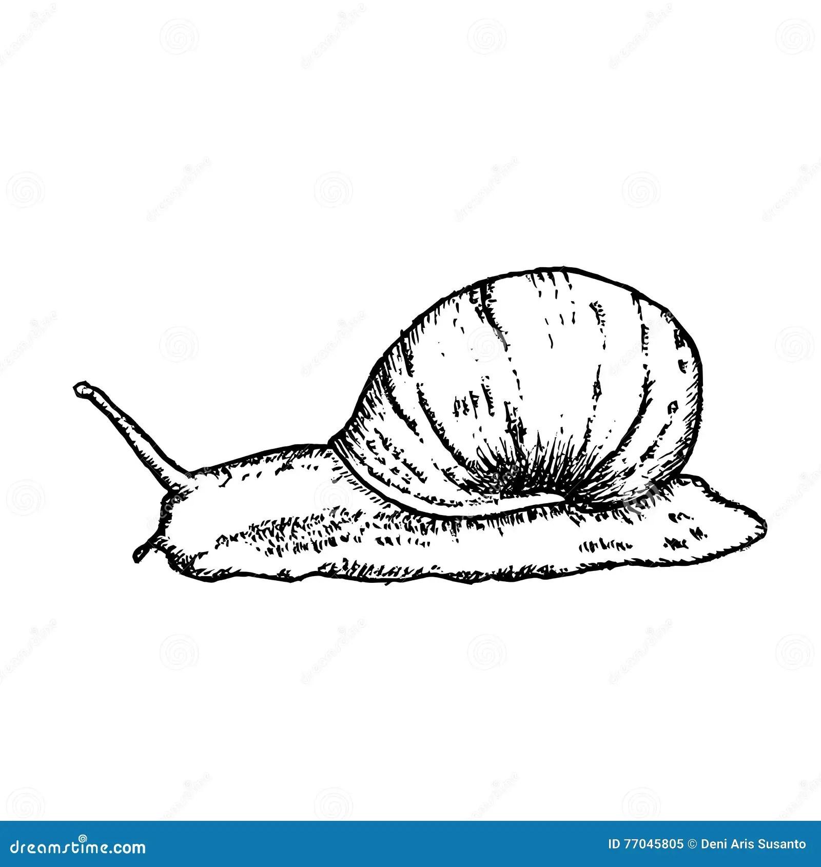 Snail Hand Drawn Vector Illustration Stock Vector