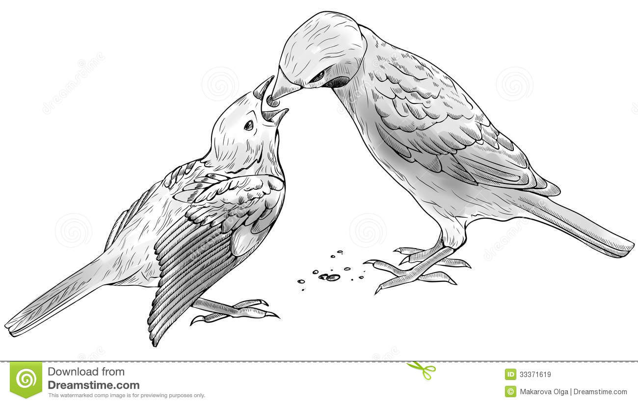 Sparrow Feeds Baby Bird Royalty Free Stock Images