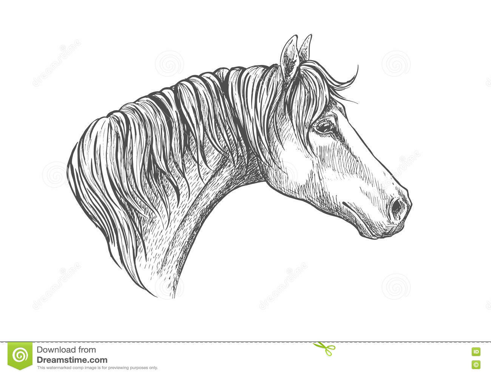 Speedy Racehorse Of American Quarter Breed Sketch Stock