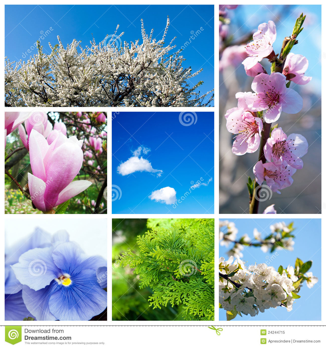 Spring Collage Royalty Free Stock Photo Image 24244715