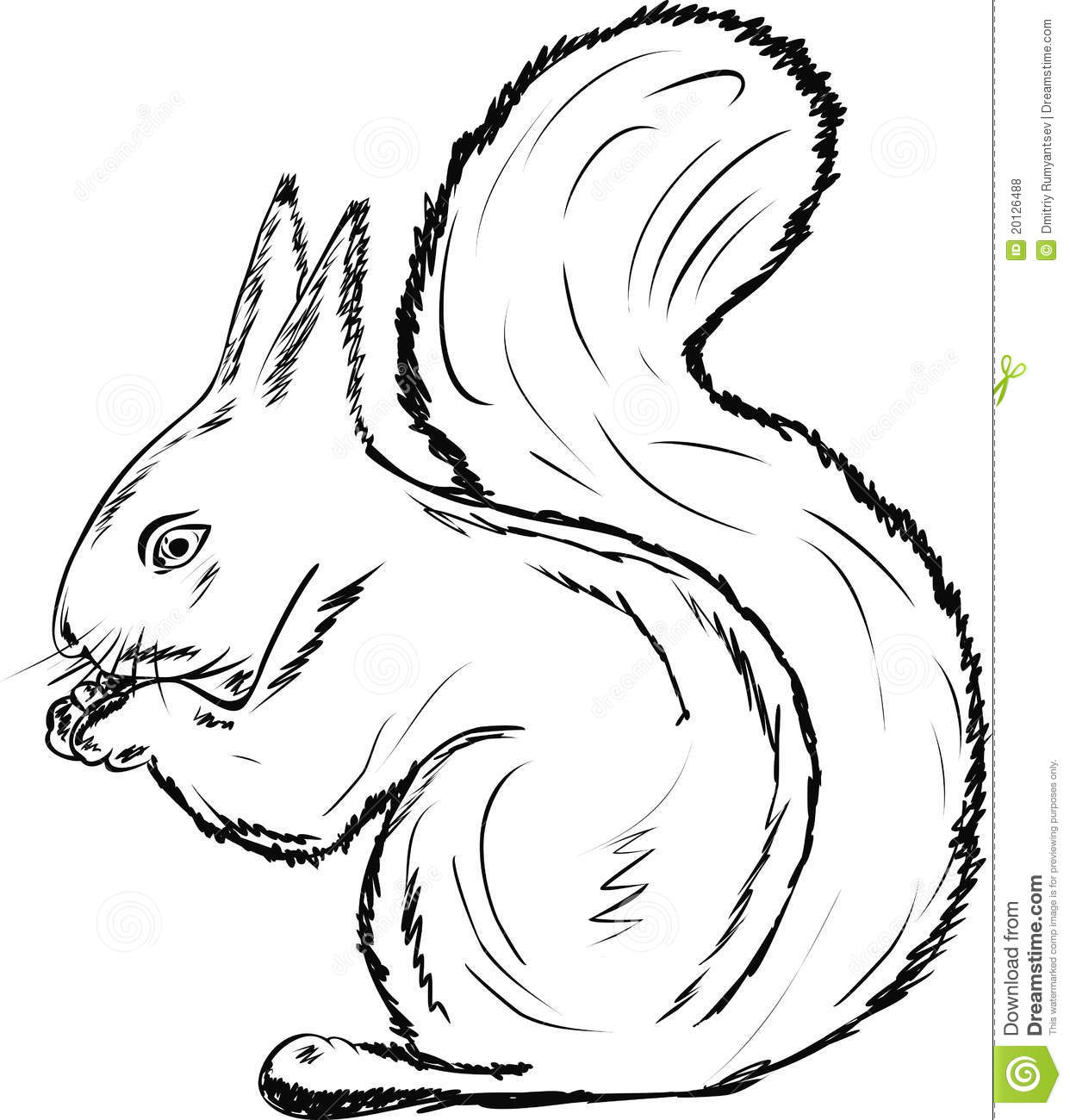 The Squirrel Gnawing Nuts On White Background Stock Vector