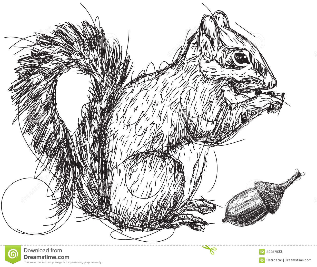 Squirrel Nut Sketch Stock Vector Illustration Of Doodle
