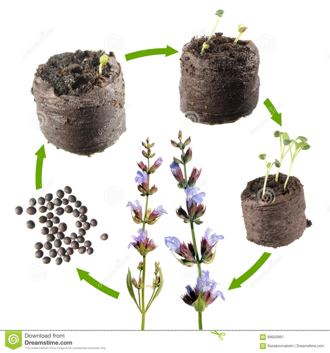 Plant Life Cycle Stock Images