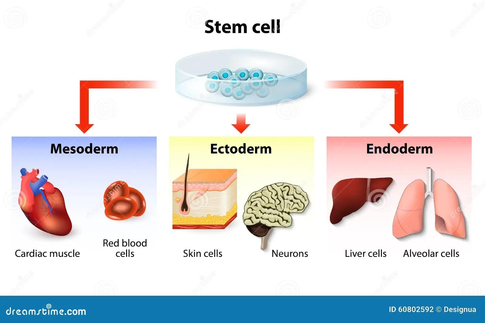 Stem Cell Application Stock Vector Illustration Of Genetic