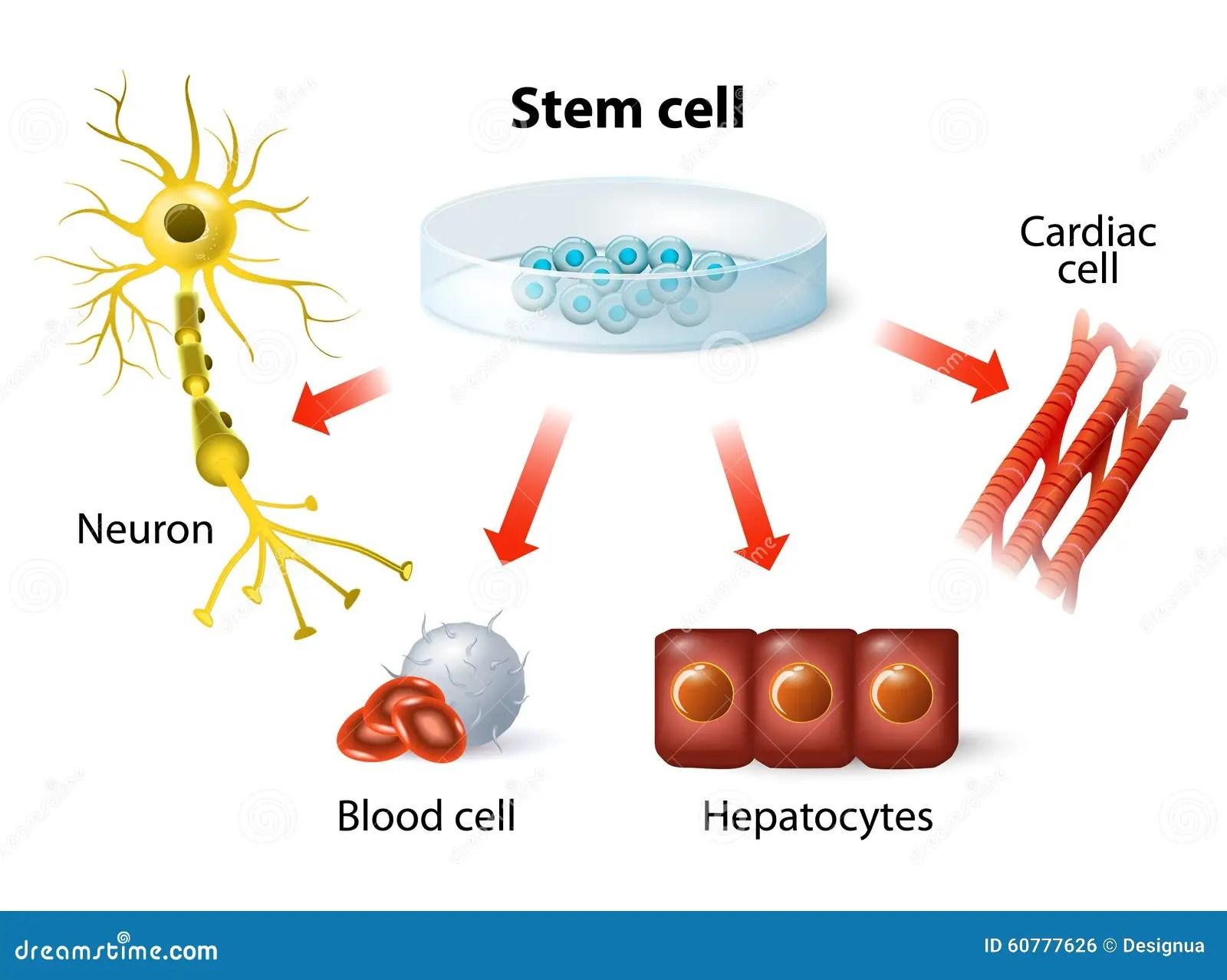Stem Cell Application Stock Vector