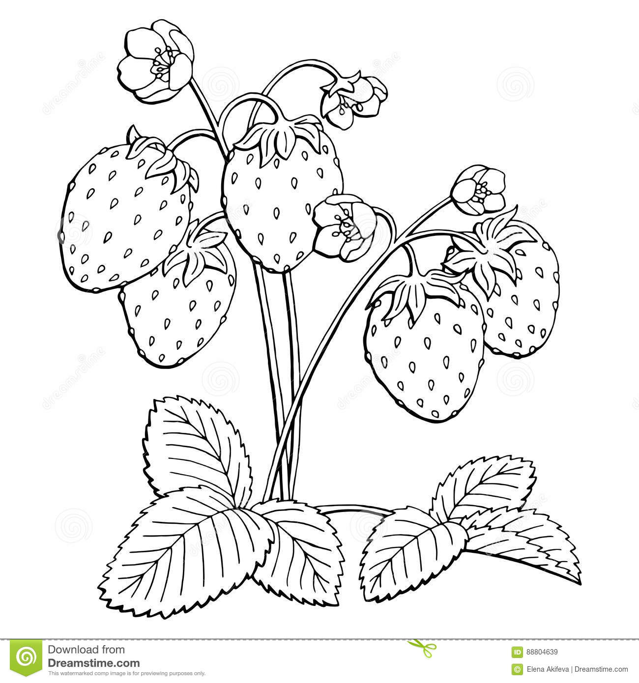 Strawberry Graphic Bush Black White Isolated Sketch