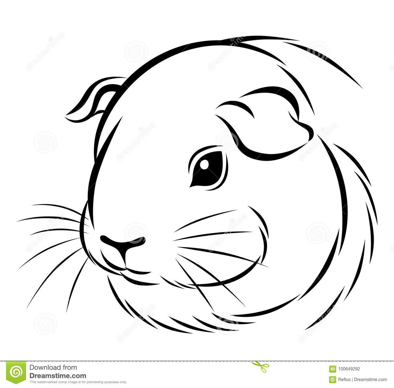 Stylized Guinea Pig Head Stock Vector Illustration Of