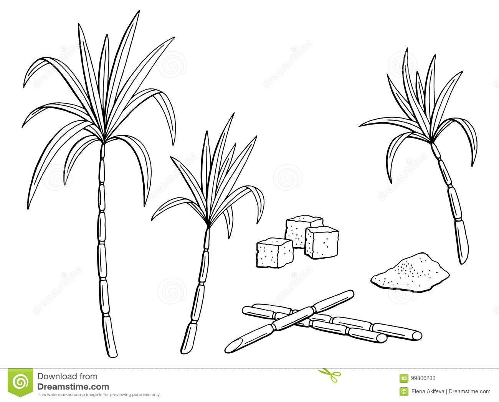 Sugarcane Cane Vector Illustration Symbol Vector