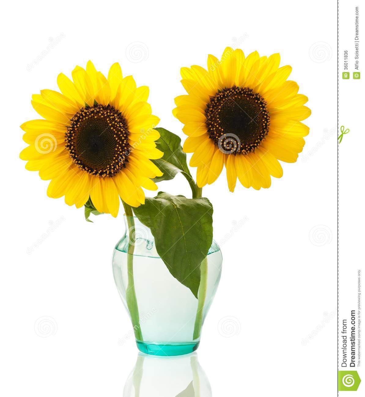 Sunflowers In Vase Stock Photo Image Of Natural