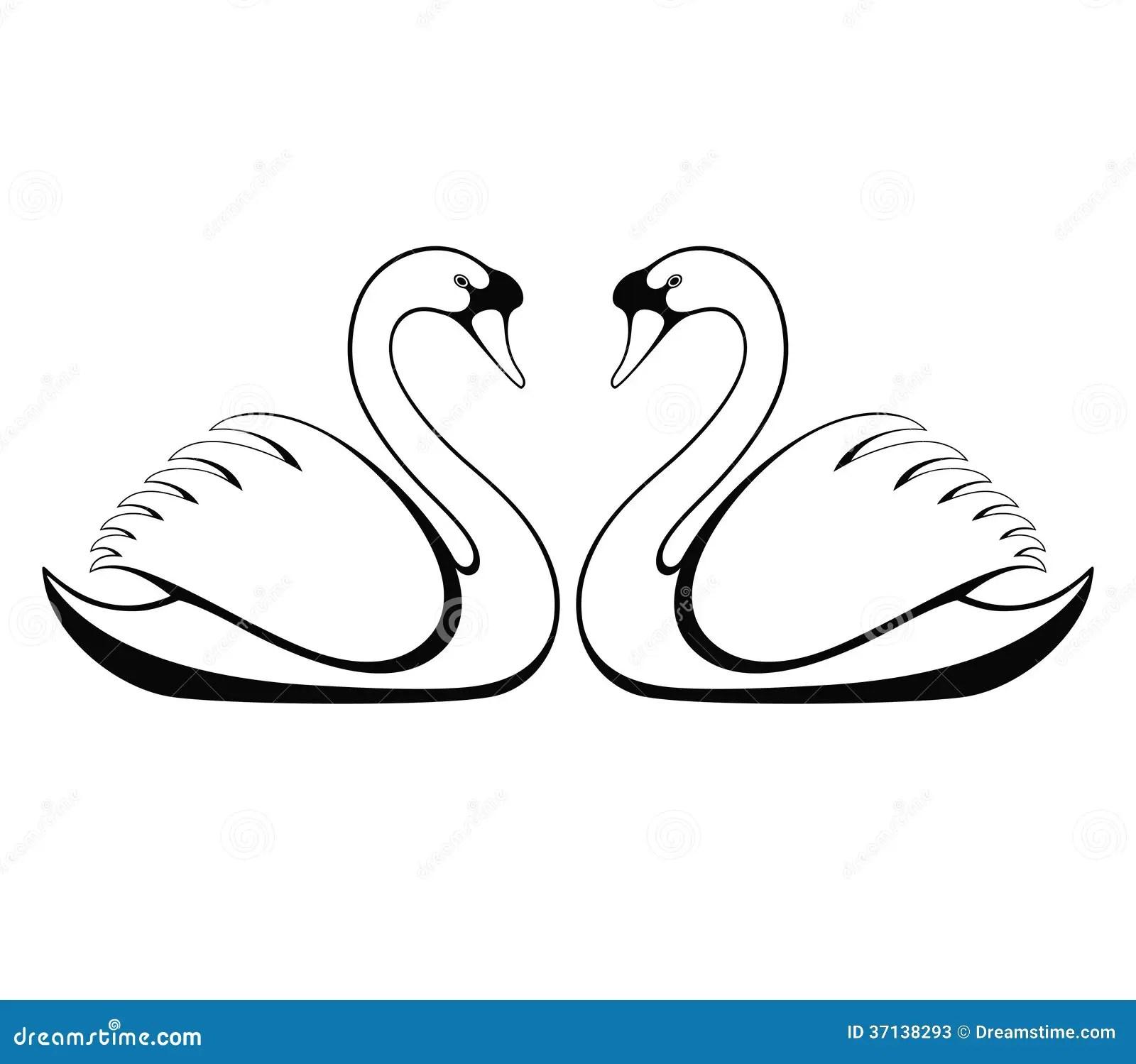 Stock Photo Swan Image
