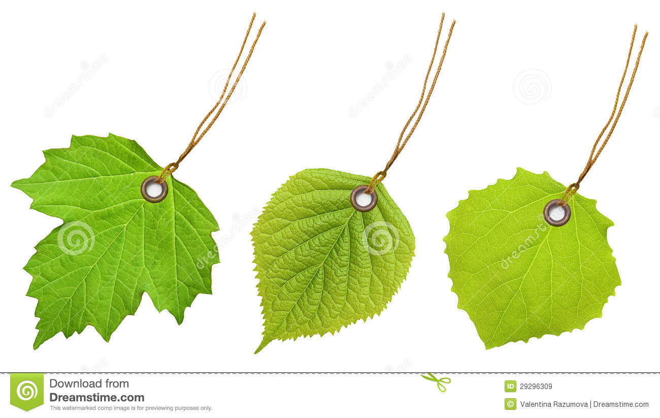 Tag Label Green Leaf Stock Image Image Of Discount