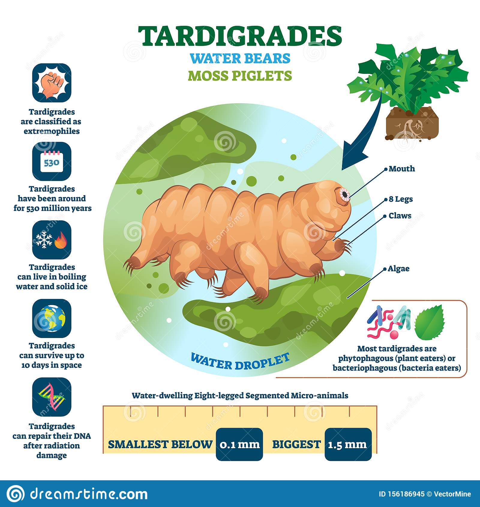 Tardigrades Water Bears Vector Illustration Labeled