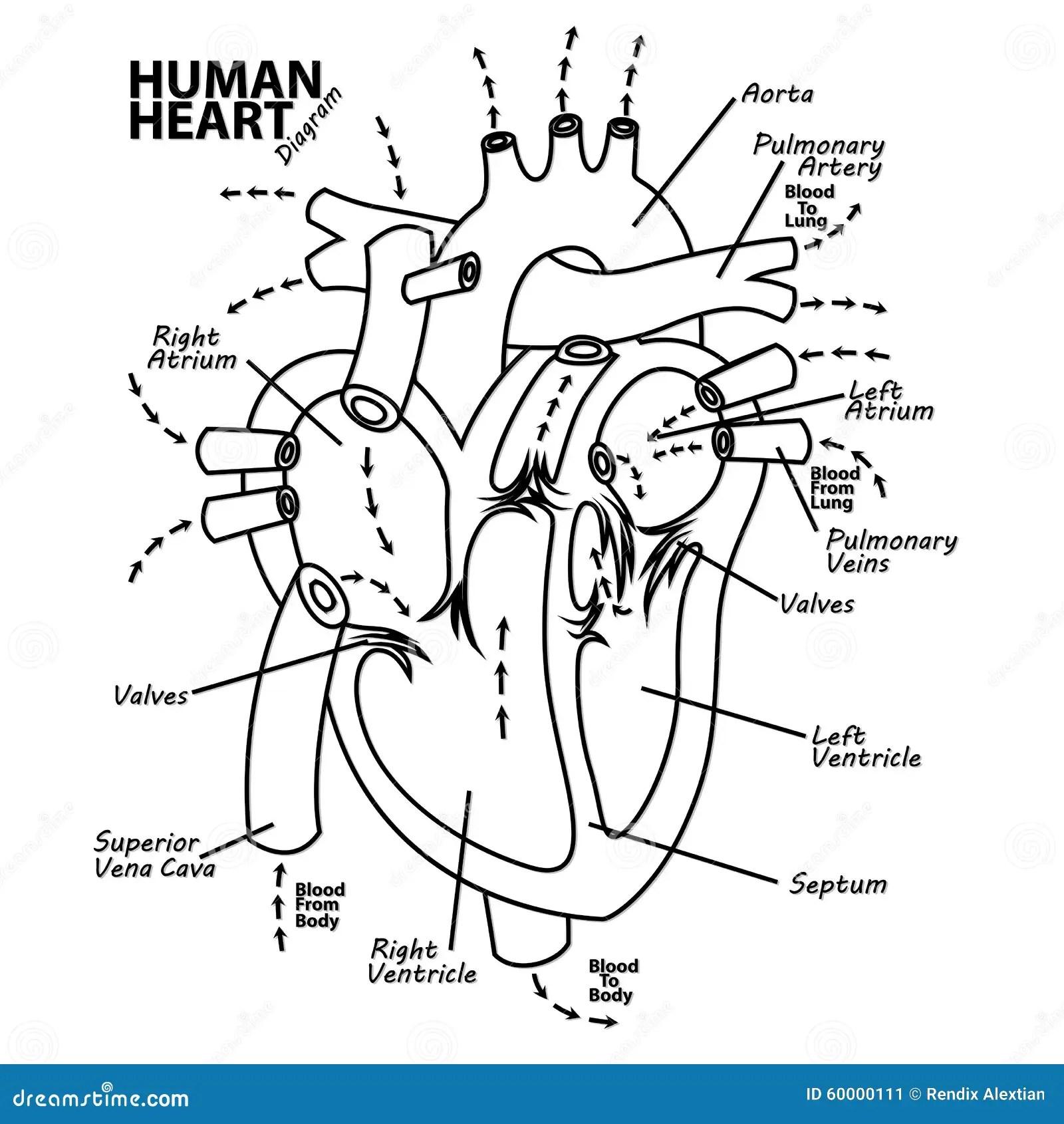 Tatuaje Humano De La Anatomia Del Diagrama Del Corazon