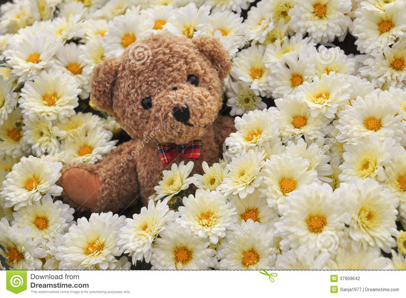 Teddy Bear In Flowers Stock Photo. Image Of Full, Isolated