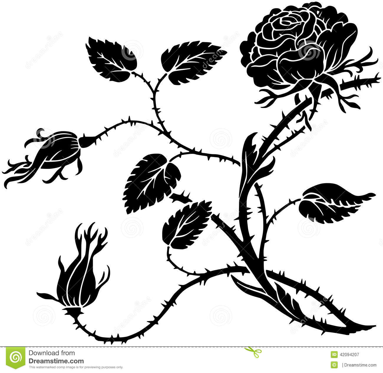 Thorny Rose Stock Vector Illustration Of Lovely