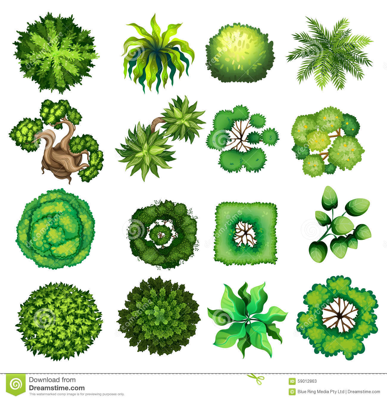 Top View Of Different Kind Of Plants Stock Vector