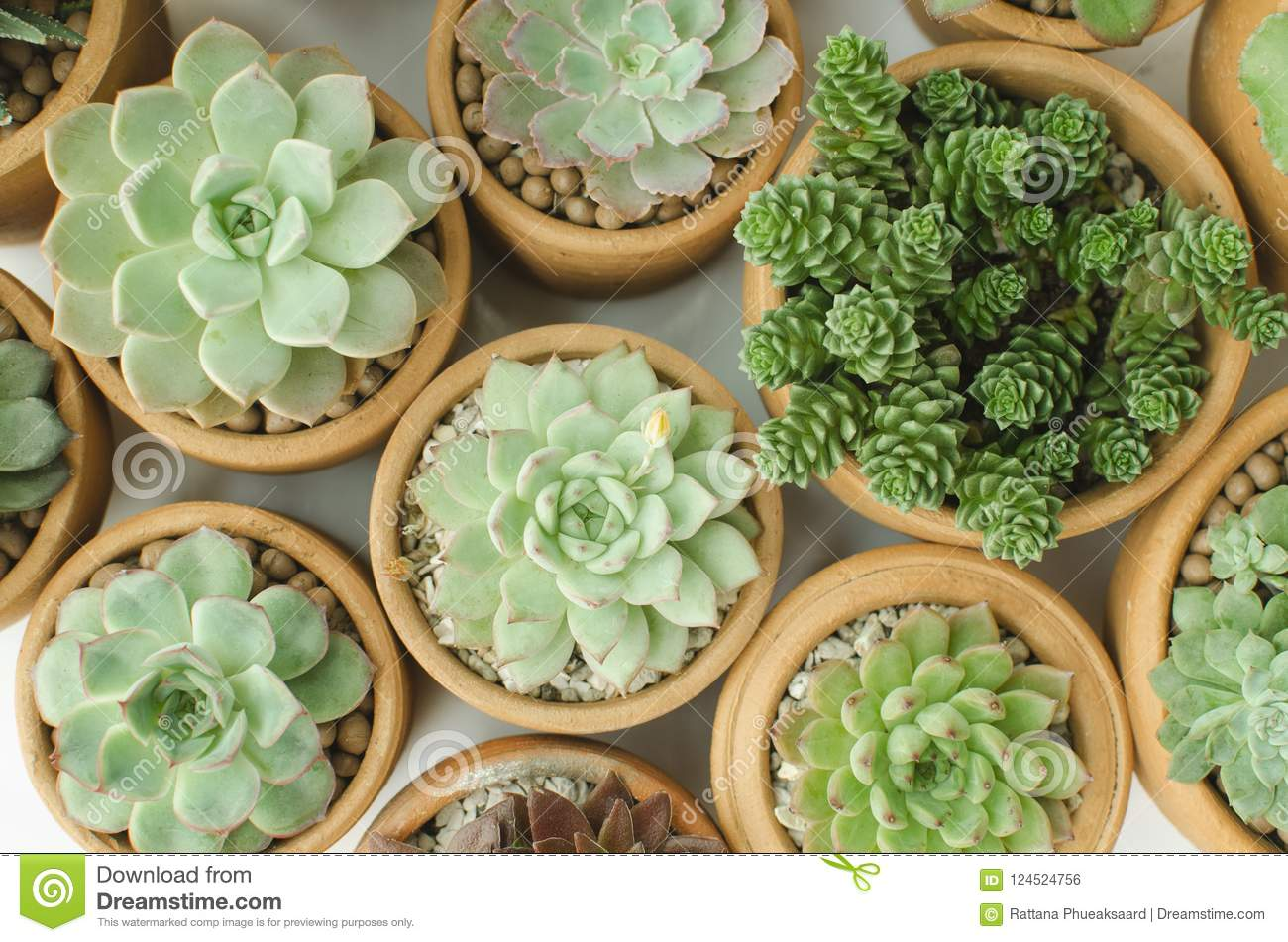 Top View Of Succulent Plant Pots Stock Photo Image Of Branch Color 124524756