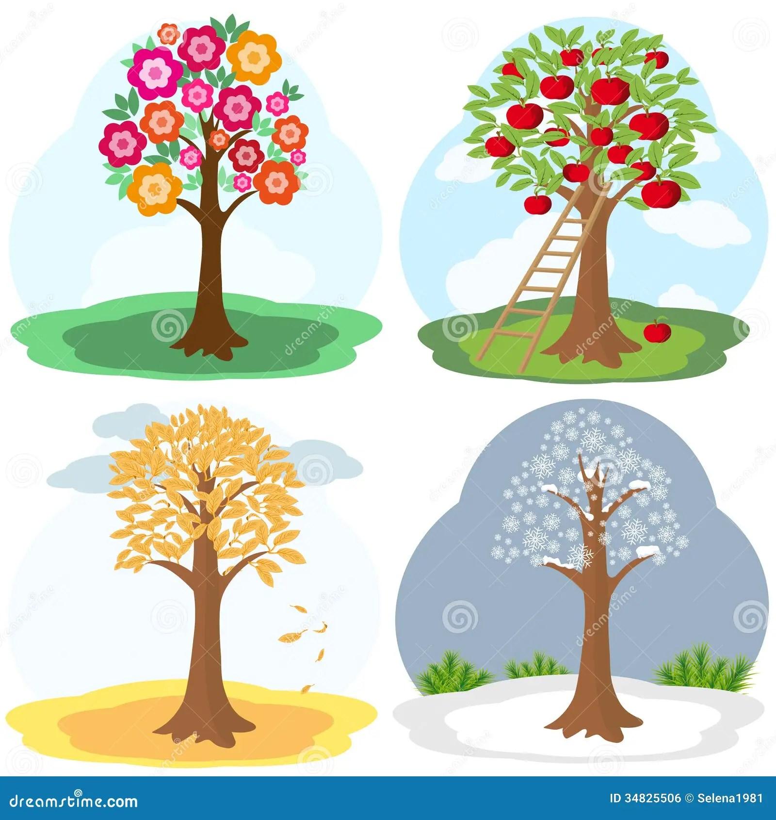Tree Four Seasons Royalty Free Stock Image