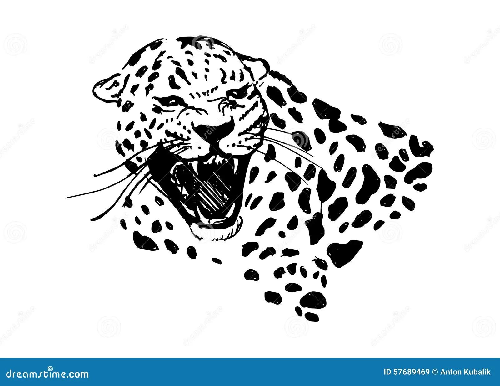 Tete De Jaguar D Hurlement Illustration De Vecteur