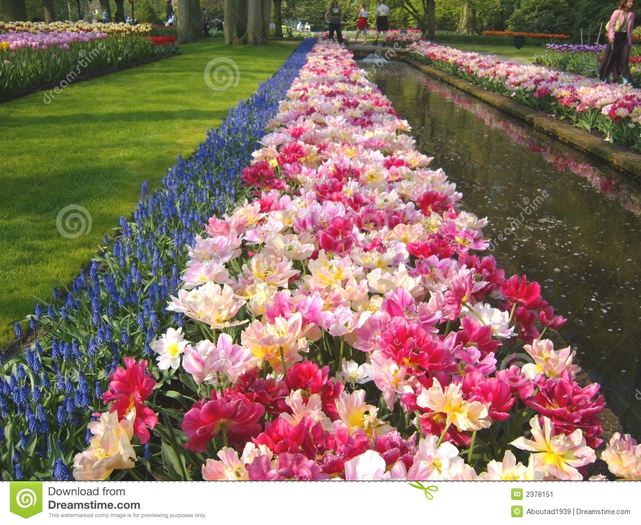 Tulip Beds And Pond Stock Image Image Of Yellow Sunlight