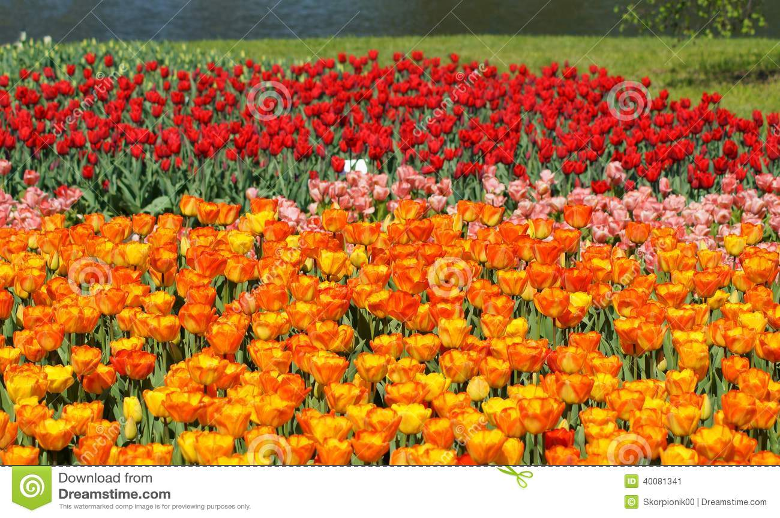 Tulips Pond