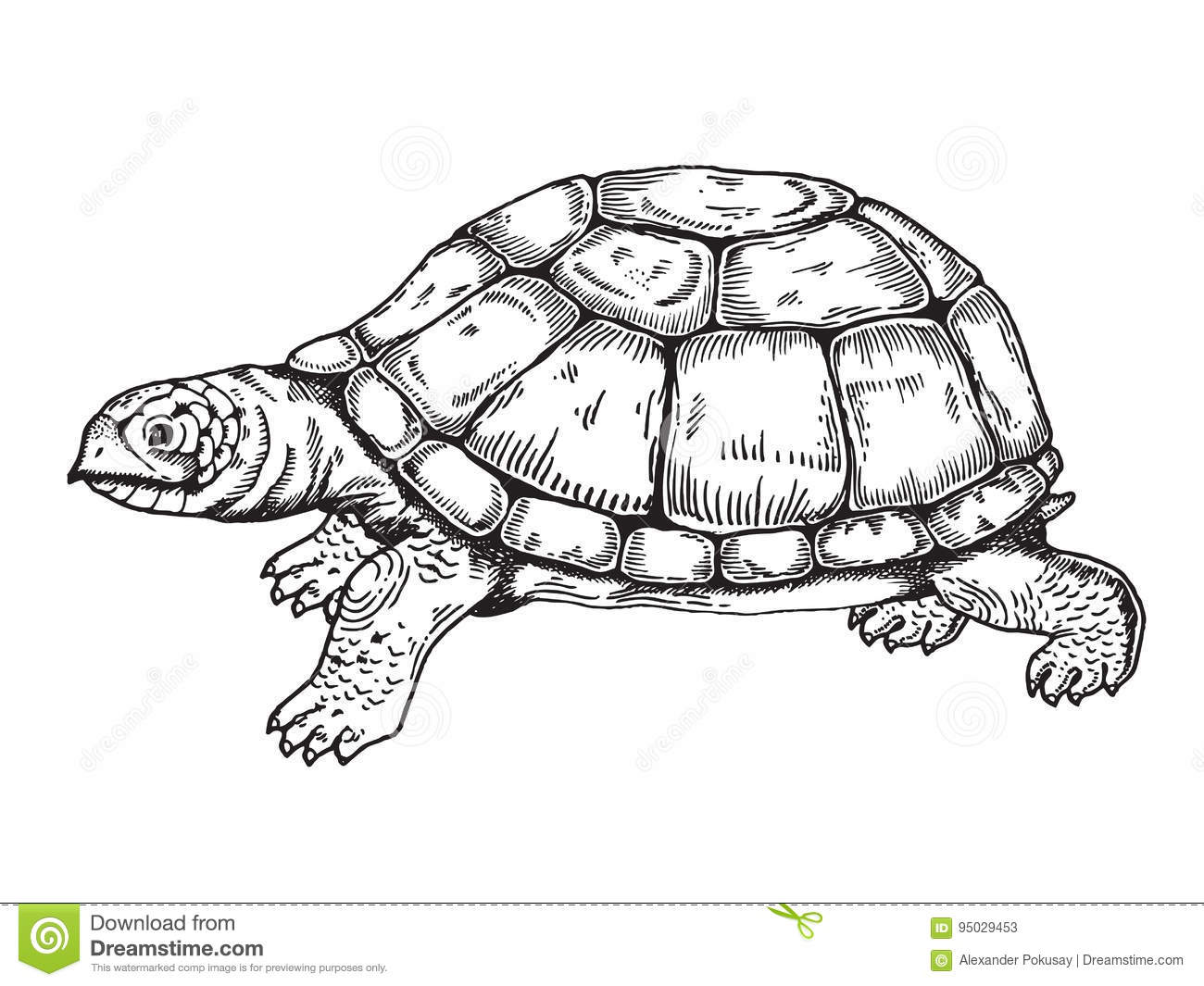 Turtle Engraving Style Vector Stock Vector