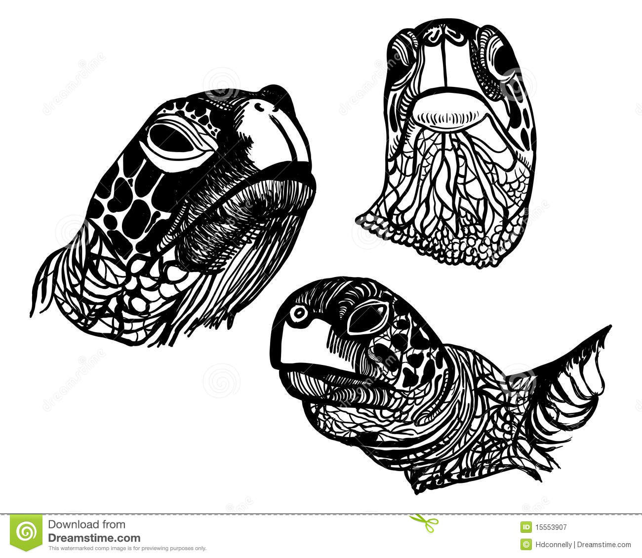 Turtle Faces Stock Illustration Image Of Sketch Wrinkles