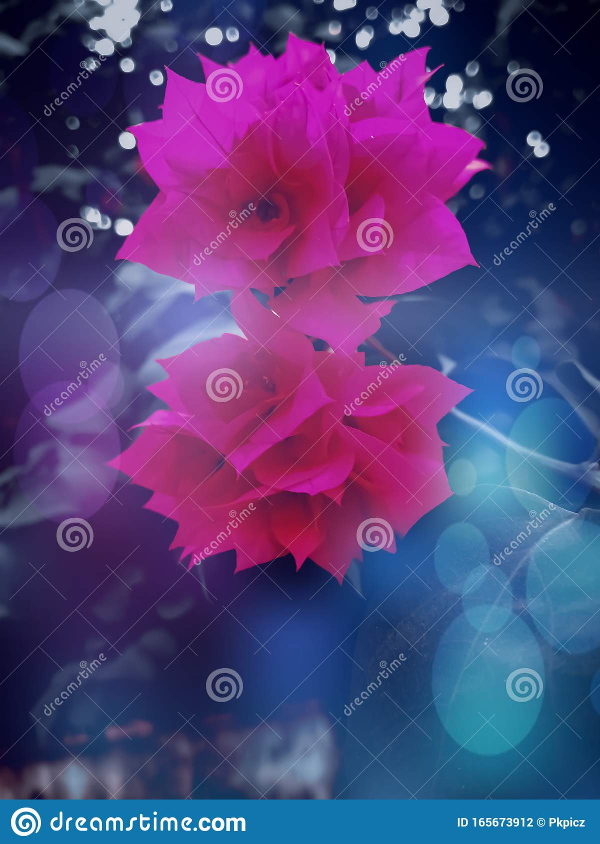 Two Pink Beautiful Flowers For Wallpaper And Background Stock Photo Image Of Beautiful Light 165673912