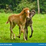 Horses Tweak Photos Free Royalty Free Stock Photos From Dreamstime
