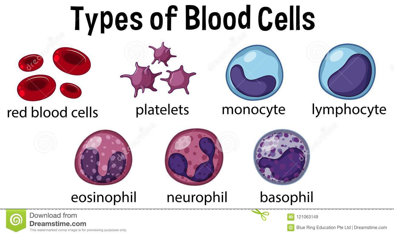 Types Of Blood Cells Stock Vector Illustration Of Medical