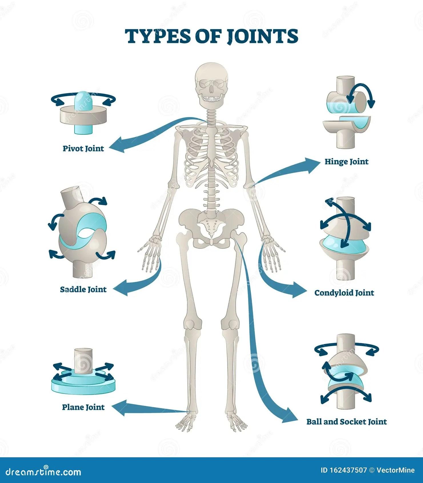 Types Of Joints Vector Illustration Labeled Skeleton