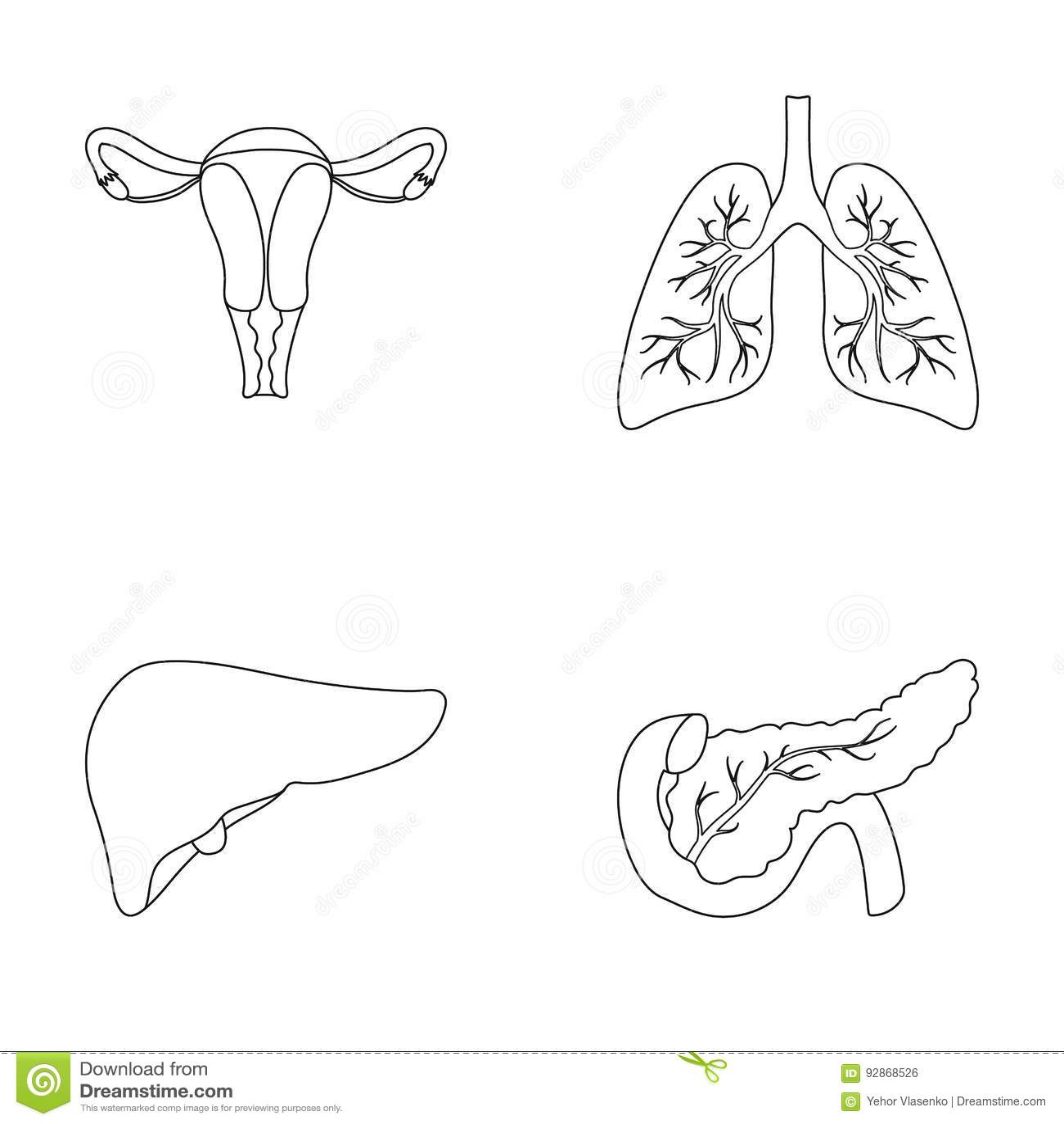 Liver Pancreas Gallbladder Duodenum And Bile Pa Cartoon