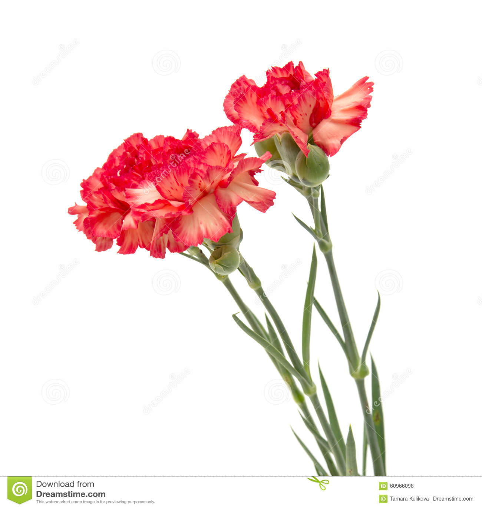 Where Buy Fresh Cut Flowers