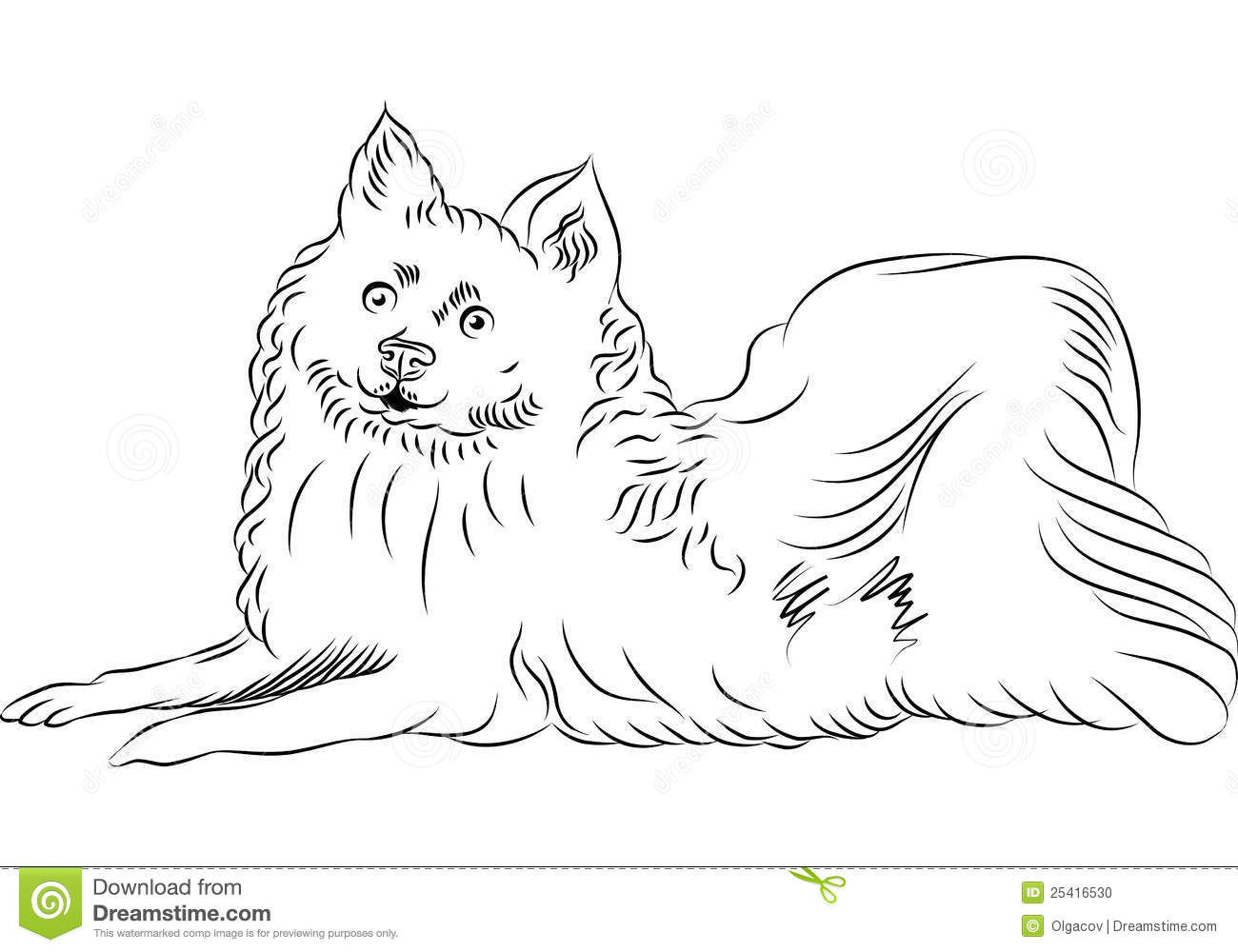 Vector American Eskimo Dog Breed Lying Stock Photo