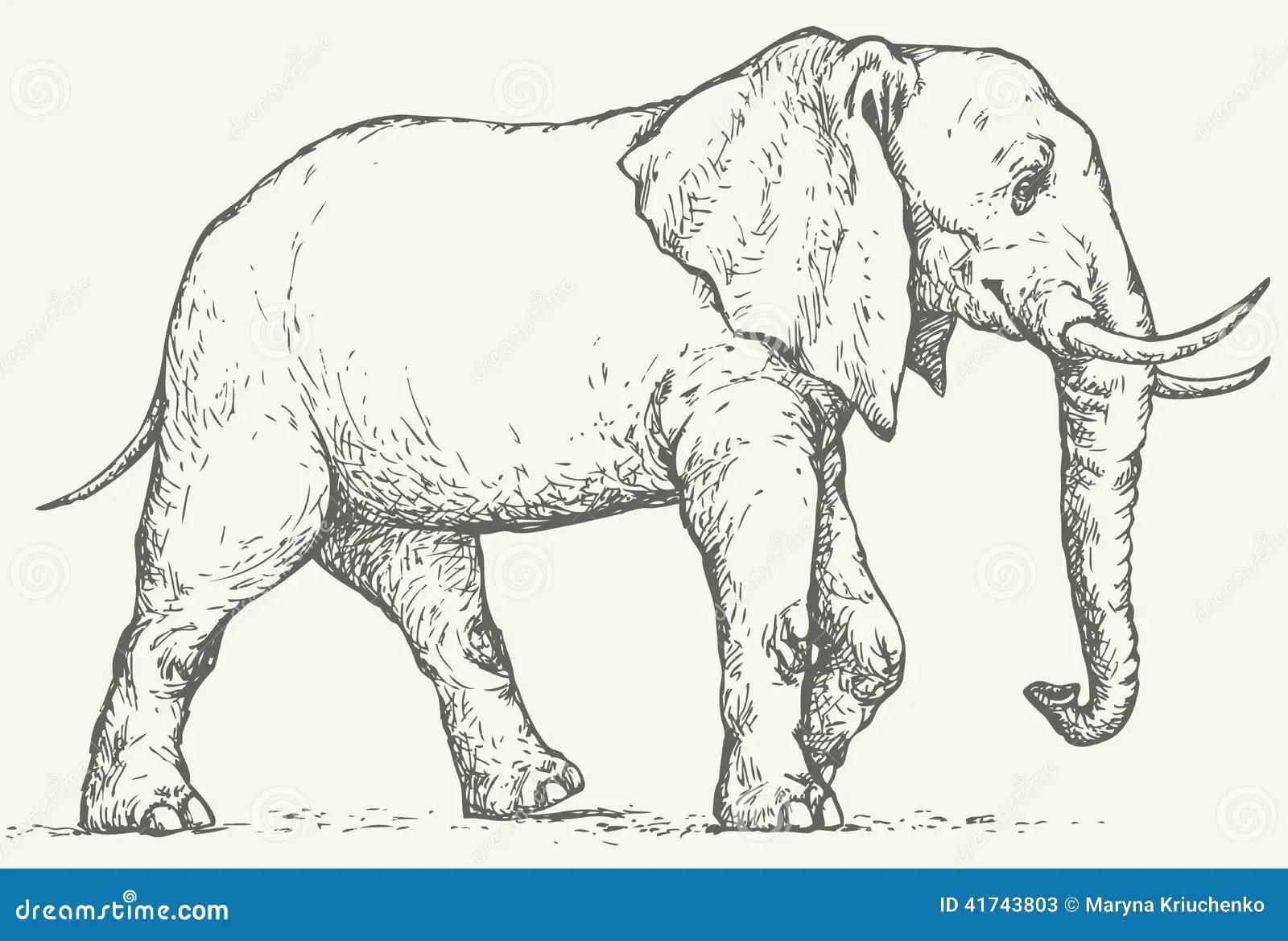Vector Drawing Elephant Stock Vector
