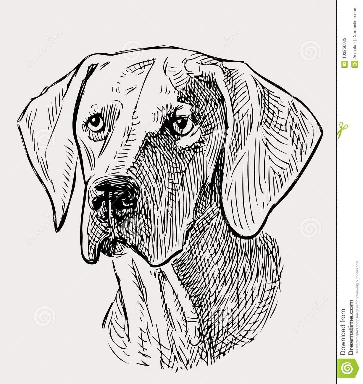 Sketch Portrait Of A Hunting Dog Stock Vector