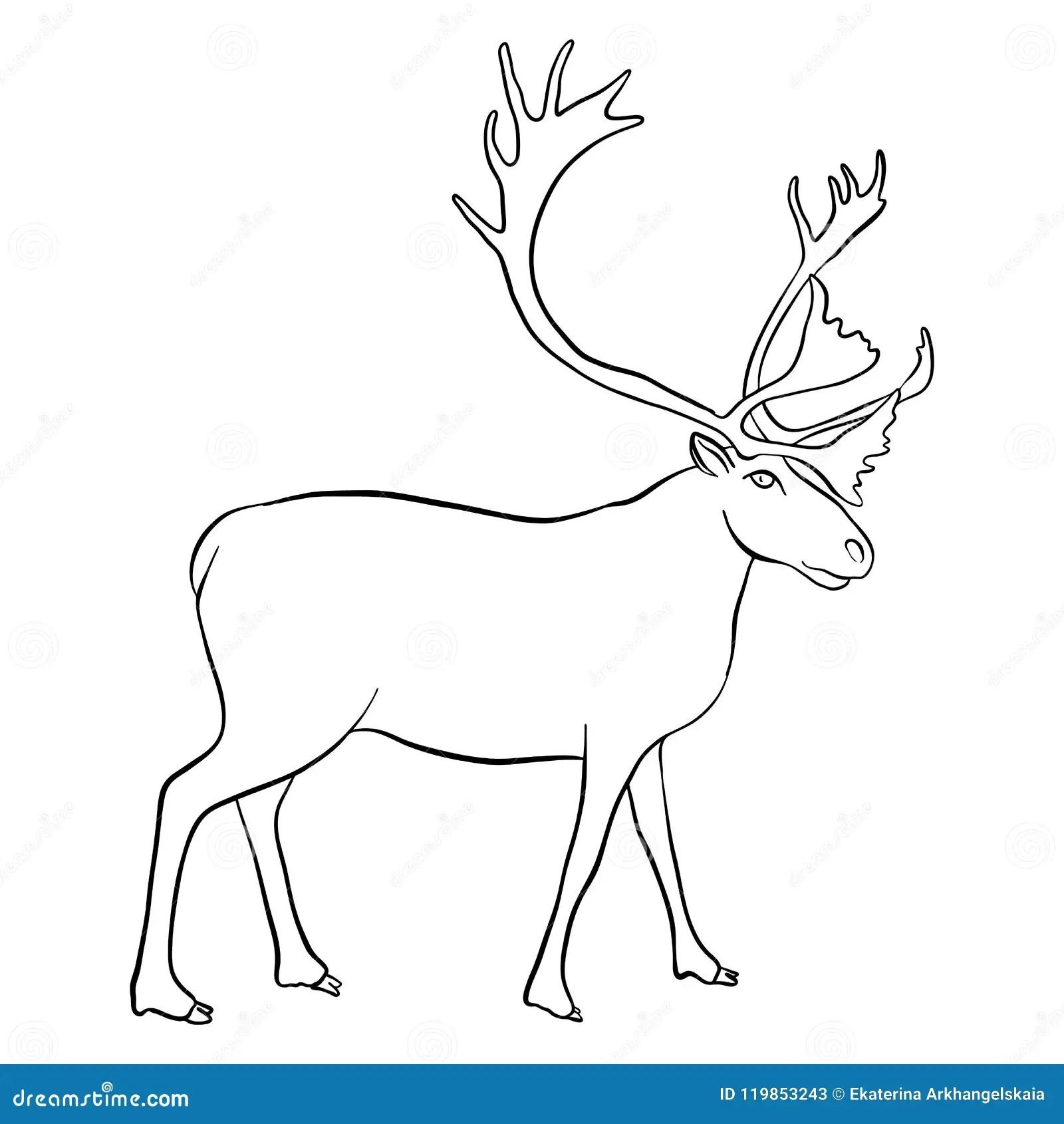 Vector Drawing Reindeer Stock Vector Illustration Of Buck