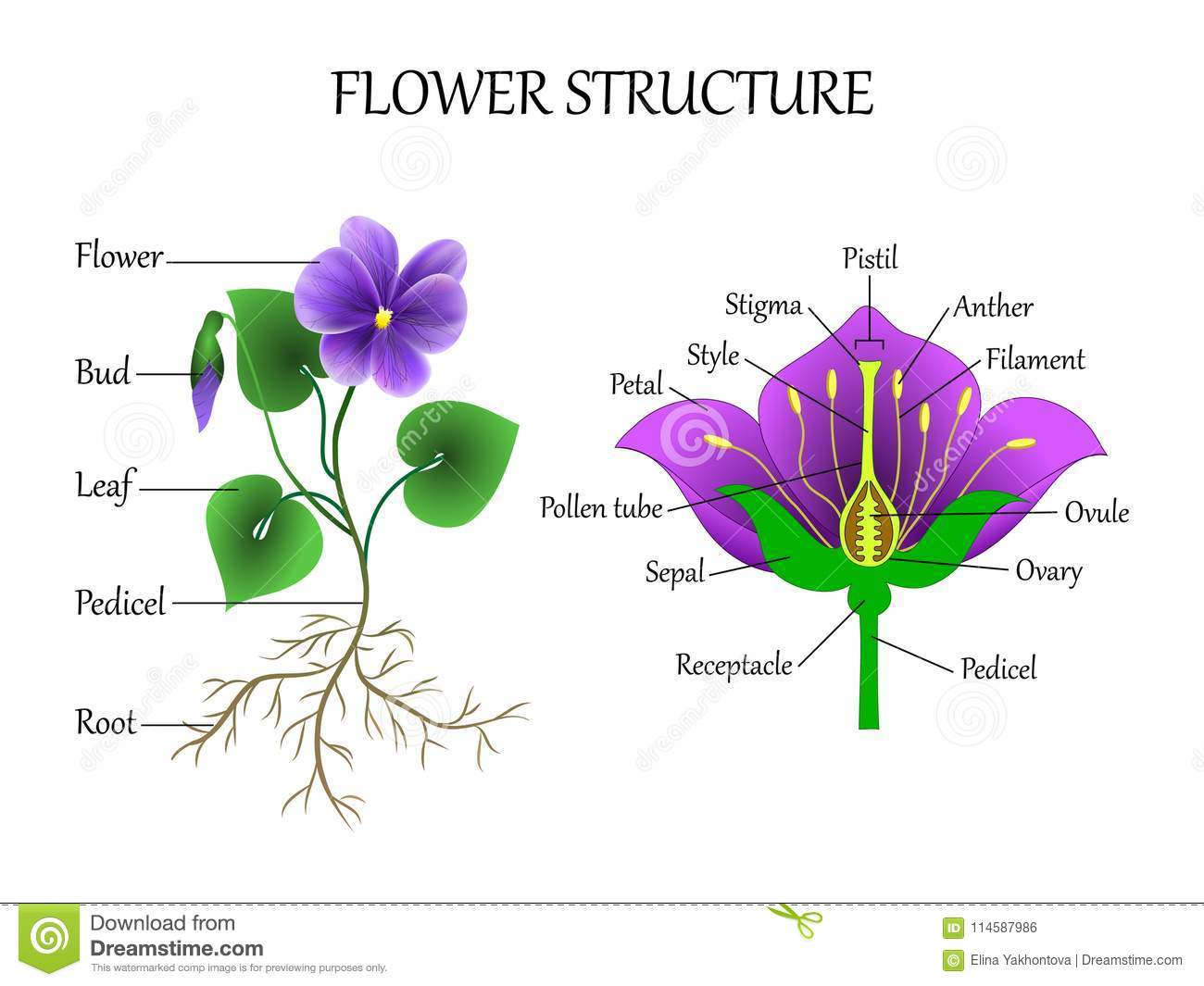 Vector Education Diagram Of Botany And Biology The