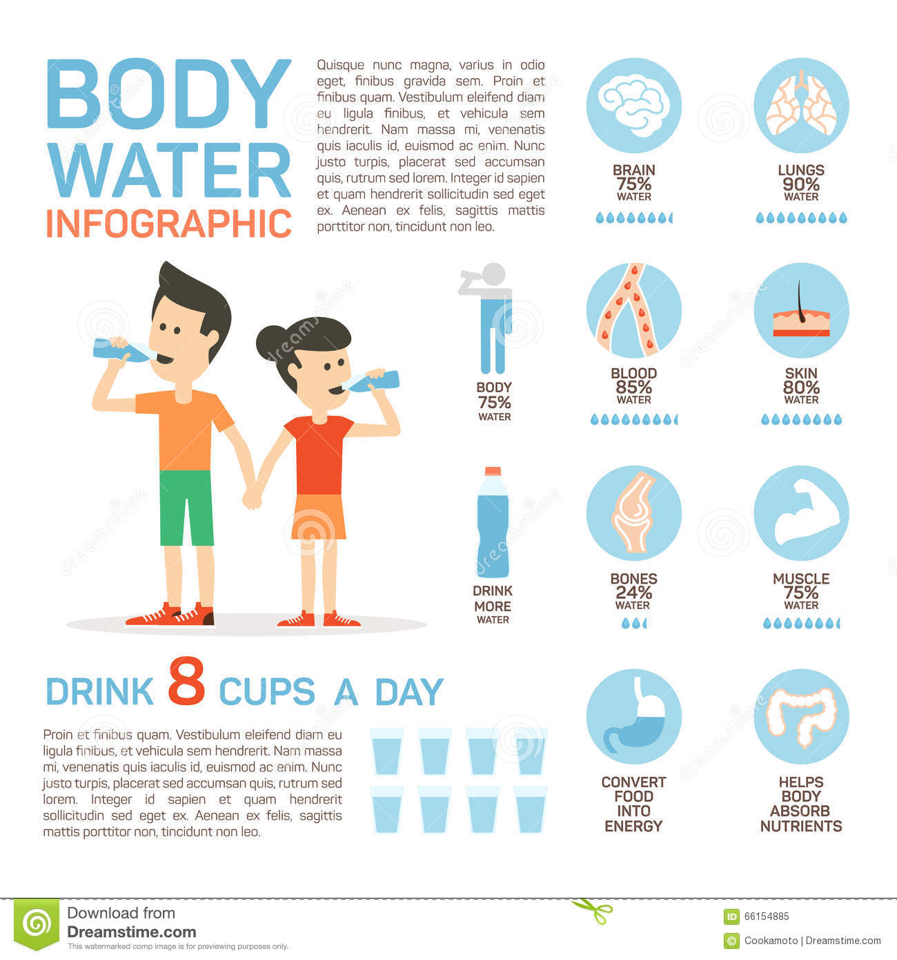 Vector Flat Style Of Body Water Infographic Concept