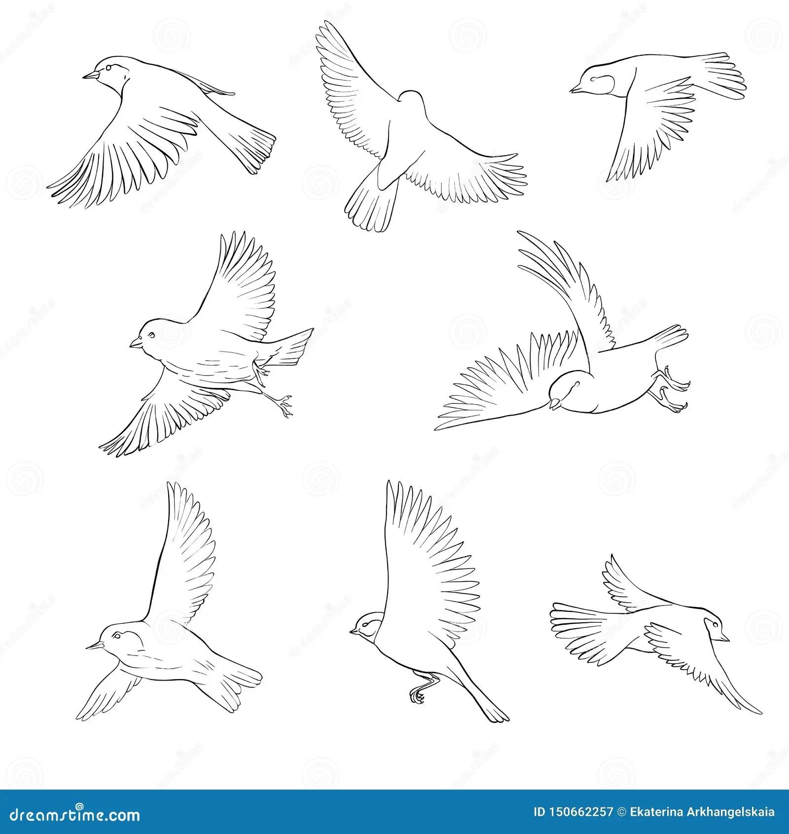 Vector Flying Bird Stock Vector Illustration Of Robin 150662257