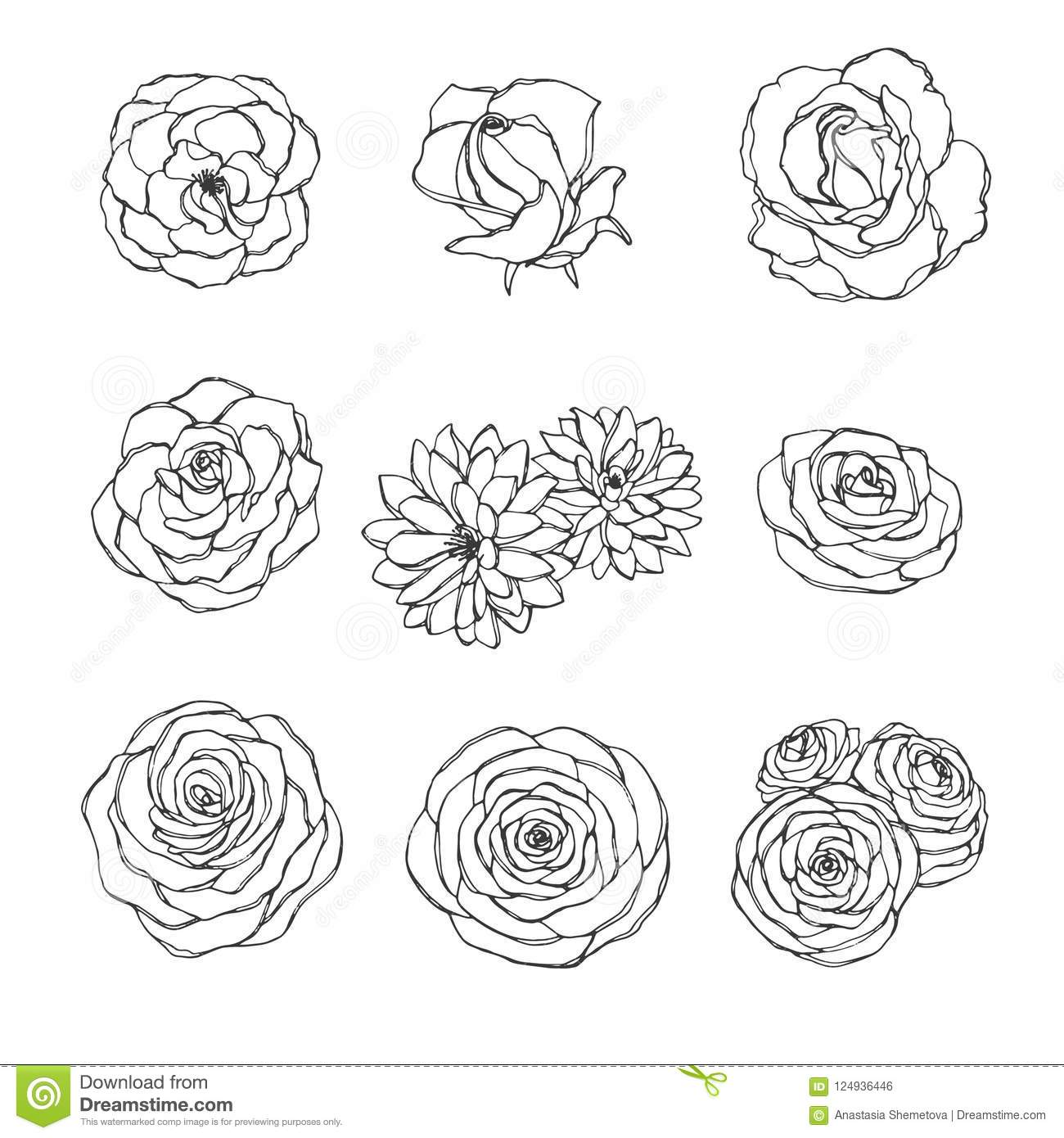 Vector Hand Drawn Set Of Rose Camellia Peony And