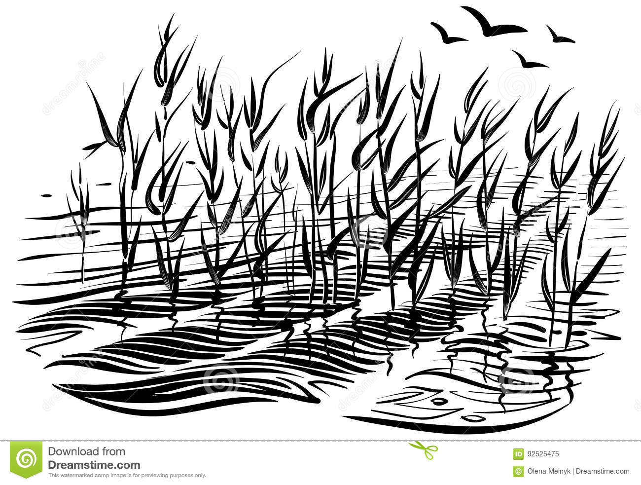 Vector Illustration Of Cattails Scene With River Grass