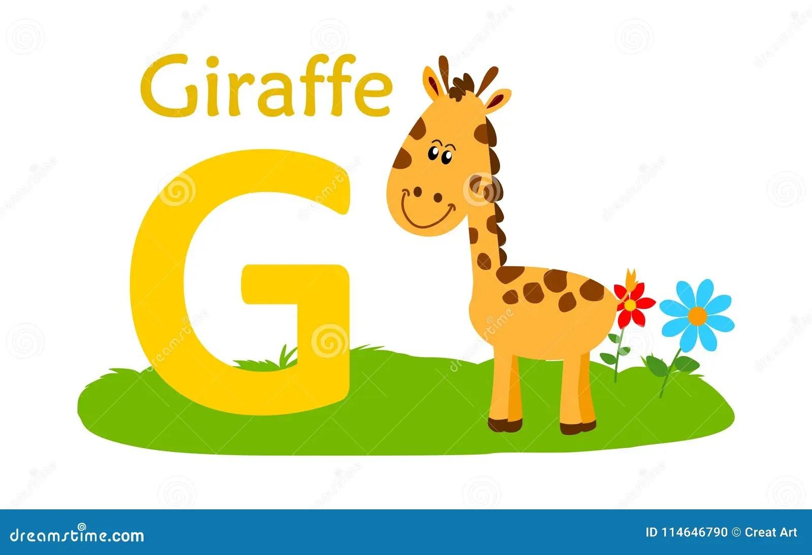 Animal Alphabet G G For Giraffe Stock Vector