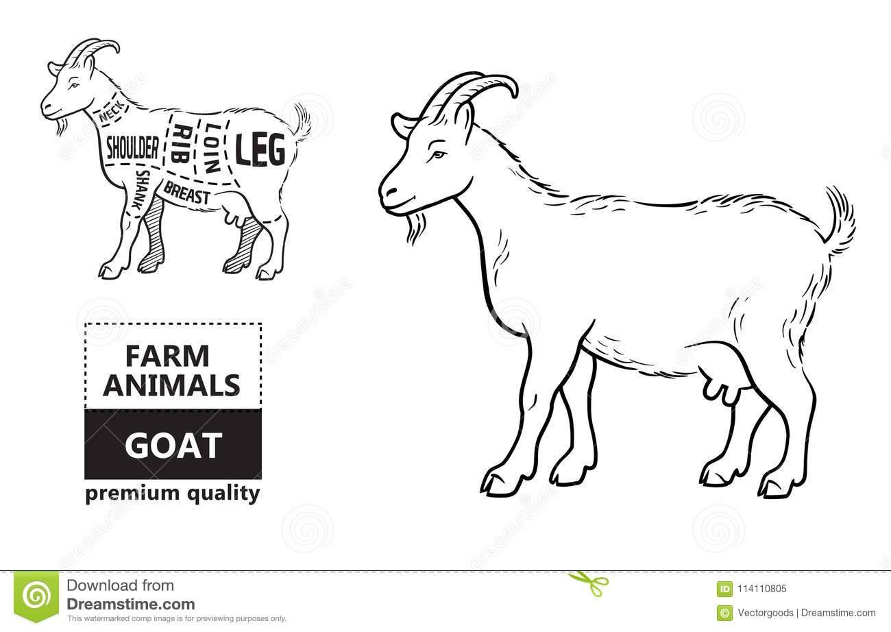 Diagram Of Goat