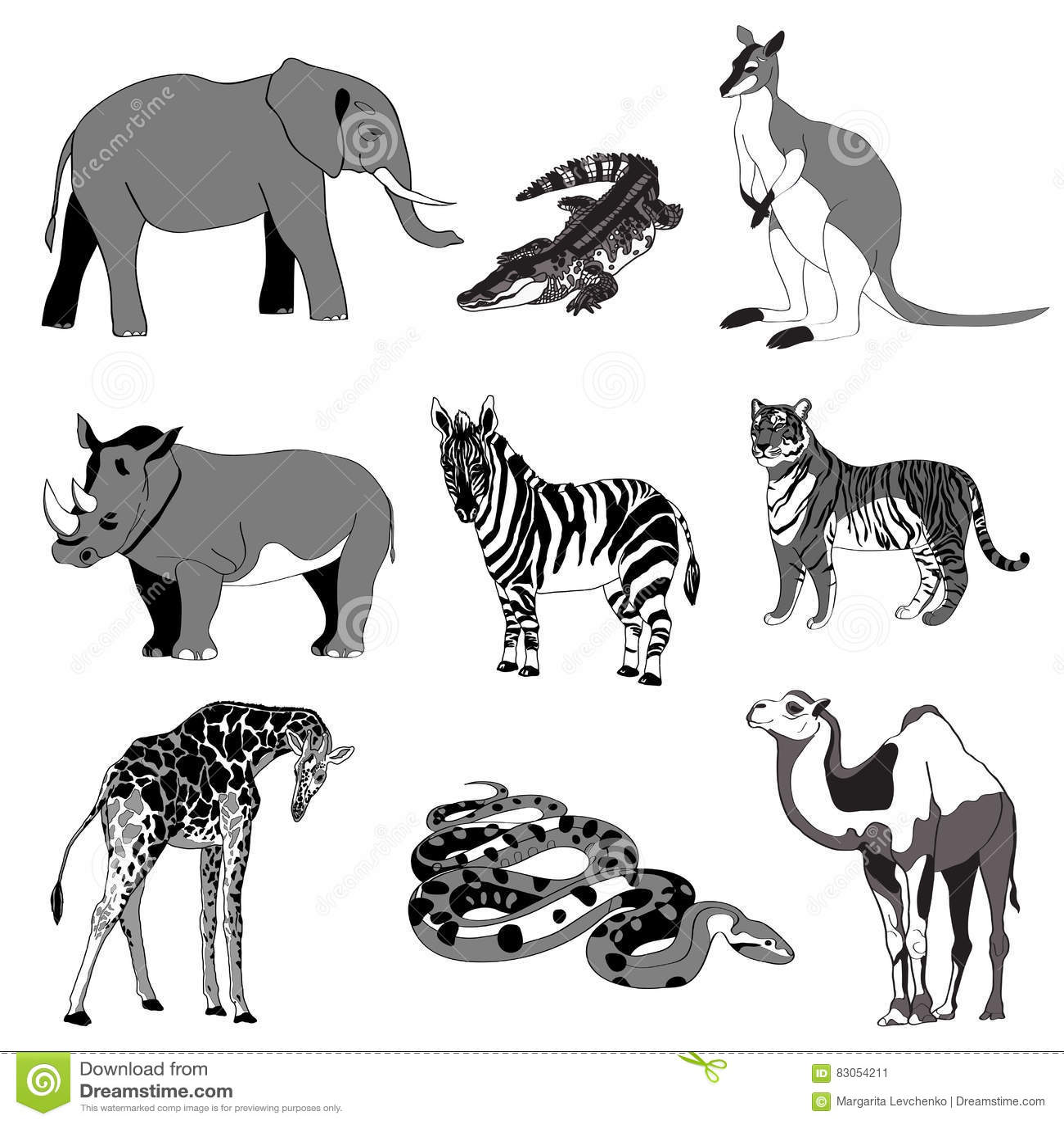 Vector Illustration Image Rhino Kangaroo Giraffe
