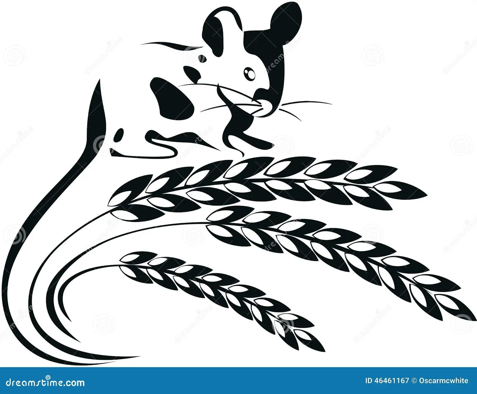 Bunch Of Wheat Grains Vector Vector Illustration