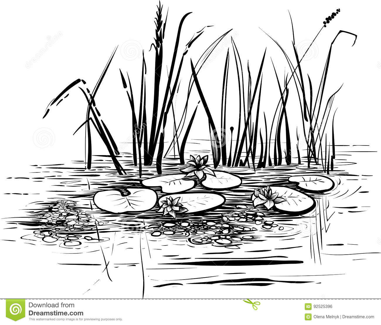 Vector Illustration With Reed And Water Lilies In The Pond